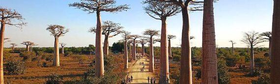 MADAGASCAR: I PARCHI DELL'OVEST E IL MARE