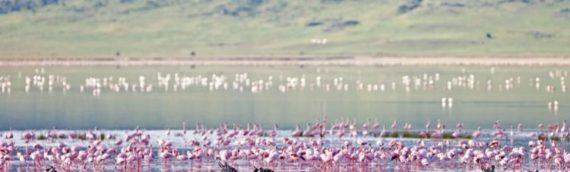TANZANIA: SAFARI NEI GRANDI PARCHI