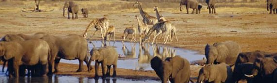 NAMIBIA: FLY AND DRIVE TRA DESERTI E PARCHI